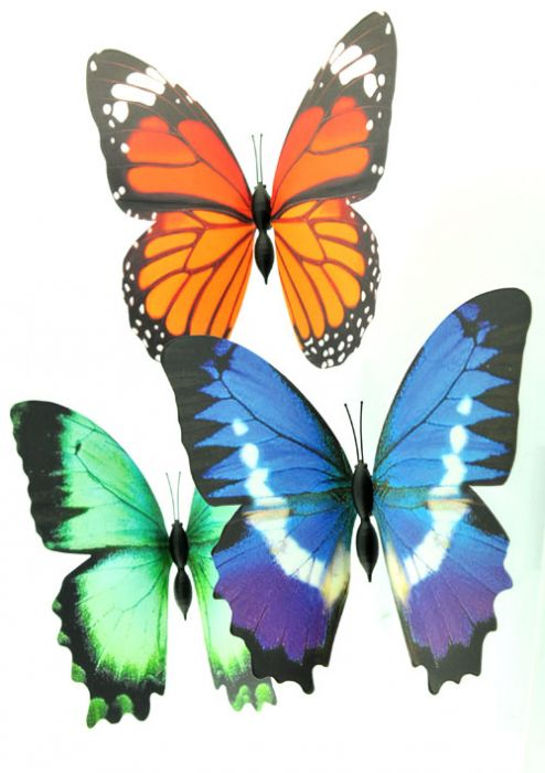 3D Folding Butterfly Magnets