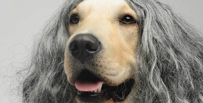 restore-a-wig-drastic-measures