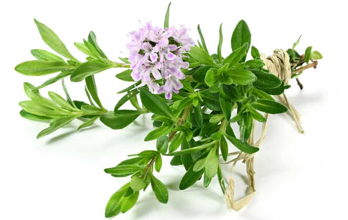 thyme-for-breast-cancer