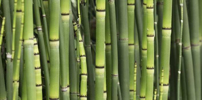 There are many benefits of bamboo clothing