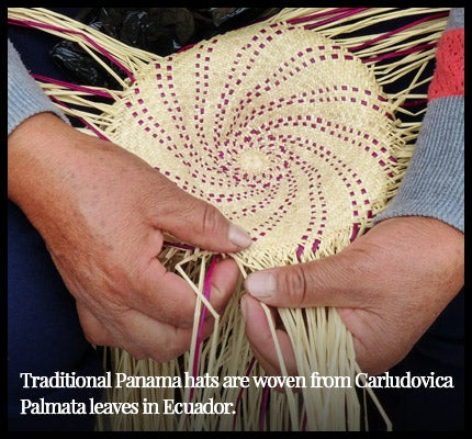 Woman weaving traditional Panama hat.