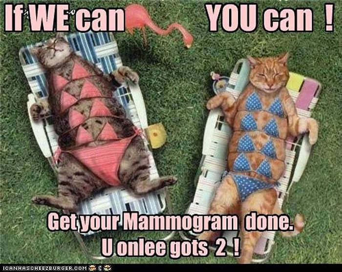 If We Can You Can cat mammogram cancer meme