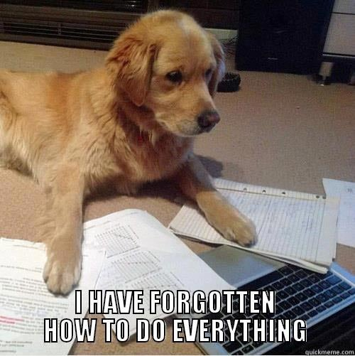 I have forgotten how to do everything dog chemo brain meme